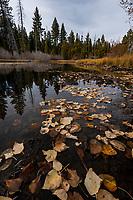 090-P104423<br /> <br /> Ed Z'berg Sugar Pine Point SP<br /> © 2019, California State Parks.<br /> Photo by Brian Baer