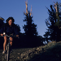 MOUNTAIN BIKING, Lois Fischer (MR) on White Mt. Road through Patriarch Grove, Bristlecone Pines.