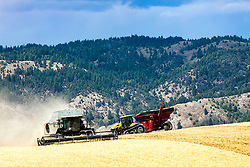 Harvesting grain on an eastern Idaho dry farm in Ririe Idaho.