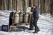 Brad Allen Maple Syrup Harvest.  Photo by Mike Roemer