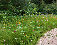 Wildflower garden. Image taken with a Leica CL camera and 23 mm f/2 lens.
