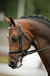 Scholtens Emmelie, (NED), Uphill<br /> WC Young Dressage Horses Verden 2006<br /> © Hippo Foto - Karin van der Meul