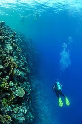 Deep blue wall diving, scuba diver, El Quseir, Egypt, Red Sea , MR