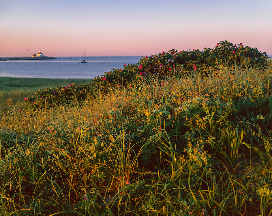 Beach grass & rugosa roses, view to Block Island Sound, Napatree Point, Watch Hill, RI