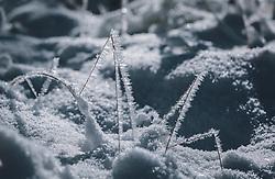 THEMENBILD - Schnee und Frost an feinen Gräsern. Das Naturdenkmal Wasenmoos lädt auch im Winter zu ausgedehnten Wanderungen in den Kitzbüheler Alpen ein, aufgenommen am 21. November 2020 in Mittersill, Oesterreich // Snow and frost on fine grasses. The natural monument Wasenmoos invites you also in winter to extensive hikes in the Kitzbüheler Alps, in Mittersill, Austria on 2020/11/21. EXPA Pictures © 2020, PhotoCredit: EXPA/Stefanie Oberhauser