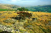 Norber glacial erratics, limestone scenery, Yorkshire Dales national park, England