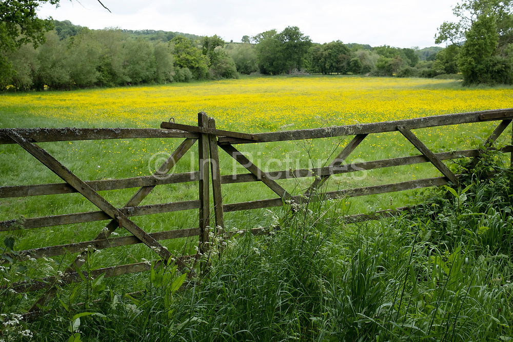 English landscape of agricultural fields covered in buttercups on 23rd May 2020 near Martley, United Kingdom. Martley is a village and civil parish in the Malvern Hills district of the English county of Worcestershire.