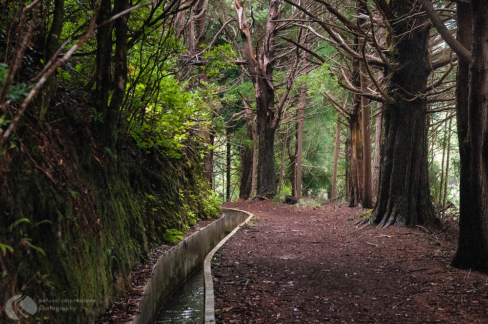 Walking the levadas on Madeira, some modern and upkept, others ancient.