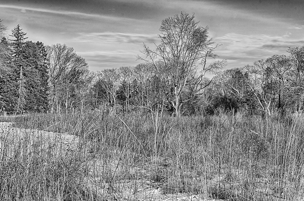 There are so many elements to this image, the partially cloudy late afternoon sky, the trees, mostly bare, all the dormant grasses and the path through the snow.