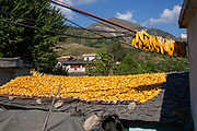 drying corn cobs on the roof of a house in a village in the Himalayas, Himachal Pradesh, India