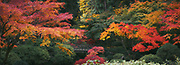 Portland Japanese Gardens in the fall 2017