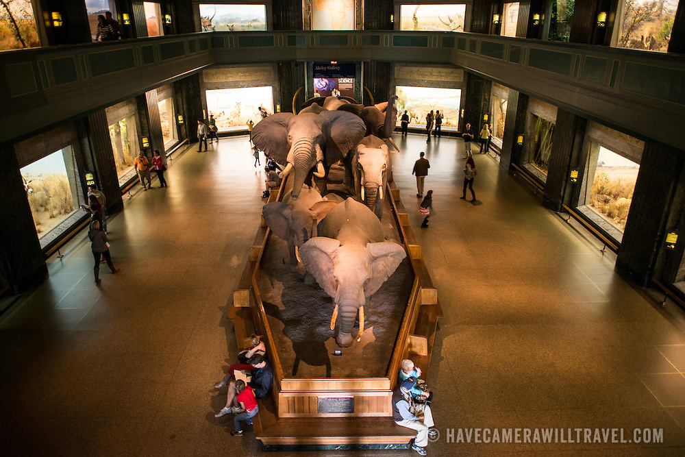 Elevated view of the great mammals hall at the Museum of Natural History in New York's Upper West Side neighborhood, adjacent to Central Park.