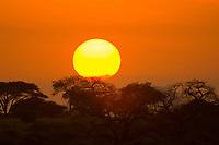 Sunrise over acacia trees, Tarangire National Park, Tanzania