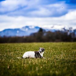 Field near Strahallan Castle