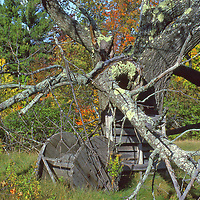 Hiking in the Adirondack State Park near Lake Placid, old apple tree and wooden spool.