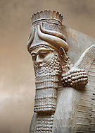Stone statue of a winged bull. Reproduction from the facade of the throne room,  Inv AO 30043 from Dur Sharrukin the palace of Assyrian king Sargon II at Khorsabad, 713-706 BC.  Louvre Museum Room 4 , Paris .<br /> <br /> If you prefer to buy from our ALAMY PHOTO LIBRARY  Collection visit : https://www.alamy.com/portfolio/paul-williams-funkystock/ancient-assyria-antiquities.html  Refine search by adding background colour, place, subject, museum etc into the LOWER SEARCH WITHIN GALLERY box to <br /> <br /> Visit our ANCIENT WORLD PHOTO COLLECTIONS for more photos to download or buy as wall art prints https://funkystock.photoshelter.com/gallery-collection/Ancient-World-Art-Antiquities-Historic-Sites-Pictures-Images-of/C00006u26yqSkDOM