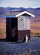 """Australian Shepherd """"Mattie"""" waiting patiently for her owner outside outhouse at Arctic Circle Overlook on the Dempster (not Dumpster) Highway, Yukon Territory, Canada."""