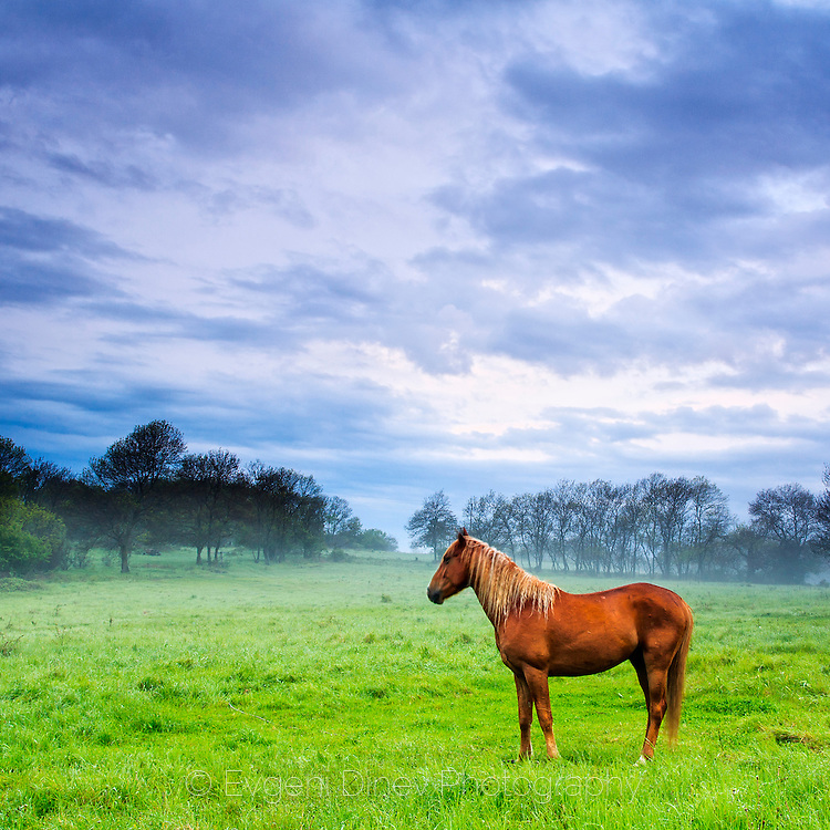 Extraordinary scene with horses on a fresh green meadow at spring