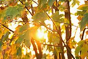 Nederland, Kekerdom, 16-11-2018Ondergaande zon in de Millingerwaard, natuurgebied van staatsbosbeheer langs de Waal, Rijn .Foto: Flip Franssen
