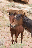 MARE AND FILLY, SAGE AND SANDSTONE UPLANDS