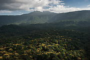 Mount Ayanganna<br /> Pakaraima Mountains<br /> GUYANA<br /> South America