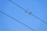 two swallows sitting on electrical wires against a bright blue sky