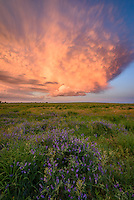 The remnants of a low-precipitation supercell moves past a prairie outside of Norfolk, Nebraska. This storm dropped large hail earlier on, but started to die shortly before the sun set. After watching the sun slip beneath the horizon in the other direction, I went up the road a little bit and came across this stunning sky. I was fortunate to find these purple wildflowers on the side of the road to include in the foreground. The sun sets late here this time of year, this was shot after 9:00.