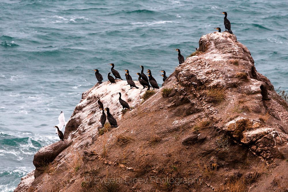 Black sea birds on a rock by the sea