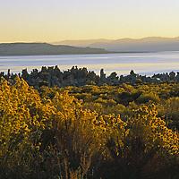 Dawn over yellow rabbitbrush and tufa towers.