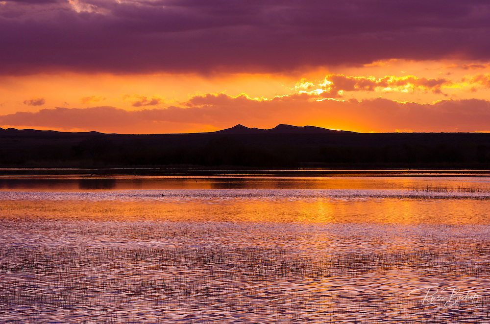 Wetlands at sunrise, Bosque del Apache National Wildlife Refuge, New Mexico USA