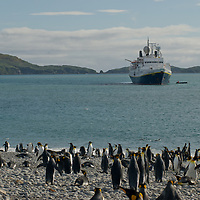 King Penguins standon a beach at Salisbury Plain, South Georgia, Antarctica. Behind them is the cruise ship, National Geographic Endeavor.