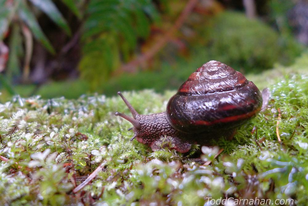 forest snail mollusc