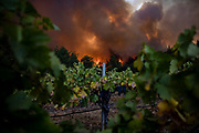 The Glass Fire burns behind Merus Wines in Napa Valley, CA on September 27, 2020. The fire began in the early morning hours and quickly grew to more than 1,500 acres.