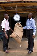 Anthony Tenywa, Ibero Coffee, and Joseph Jingo Nkumbi from Kulika, weighing coffee that a farmer has brought in to sell to Ibero through Kulika. The Kulika project run Sustainable Organic Agricultural Training Programs.
