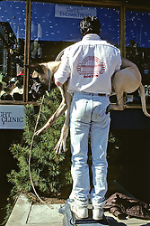 Man Trying To Weigh Great Dane