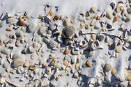 Seashells in the Snow, Cedar Beach, Southold, NY