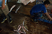 Men sort the daily catch to ship to Bogota - The fish market in Leticia - Amazonas - Colombia
