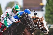 November 1-3, 2018: Breeders' Cup Horse Racing World Championships. Distant Shore battles in the Street Sense stakes race with Corey Lanerie in the irons