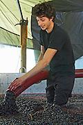 pumping grapes Luis Louro aragones grapes quinta do mouro alentejo portugal