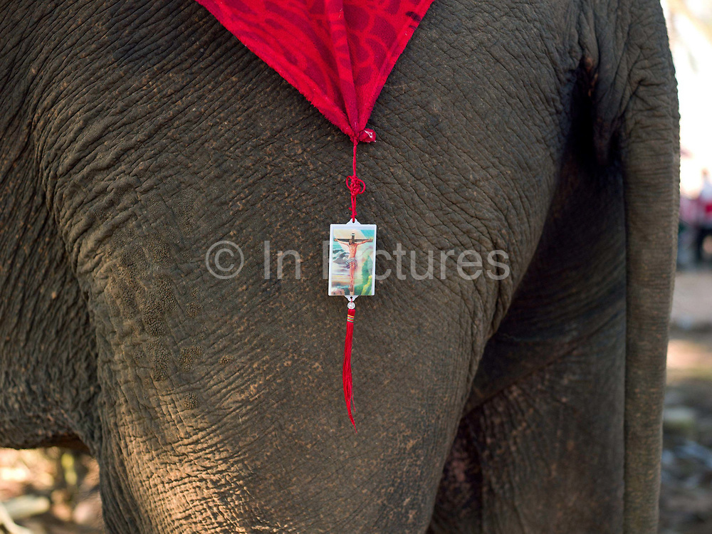 An Asian elephant wearing a religious decoration at the Sayaboury Elephant Festival, Sayaboury province, Lao PDR. Originally created by ElefantAsia in 2007, the 3-day elephant festival takes place in February in the province of Sayaboury with over 80,000 local and international people coming together to experience the grand procession of decorated elephants. It is now organised by the provincial government of Sayaboury.The Elephant Festival is designed to draw the public's attention to the condition of the endangered elephant, whilst acknowledging and celebrating the ancestral tradition of elephant domestication and the way of life chosen by the mahout.
