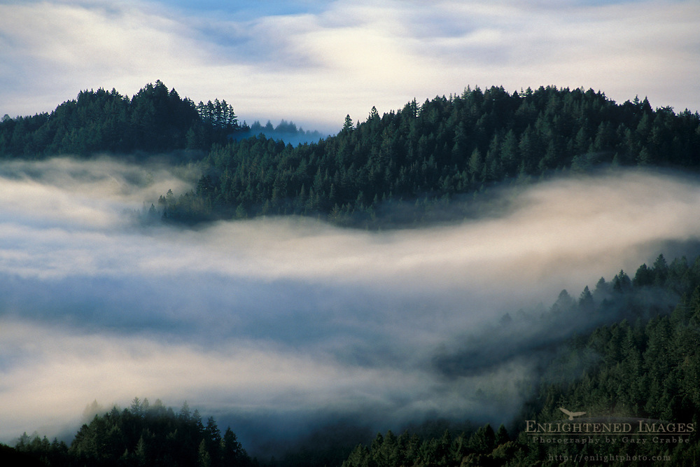 Morning fog and clouds shroud tree forest mountain slopes Mount Tamalpais Marin California Coastal fog in morning and trees on the forest hillsides and ridges of Mount Tamalpais State Park, Marin California