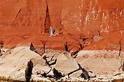 Bighorn Canyon National Recreation Area  Great blue heron taking flight