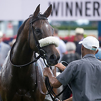 Dance Smartly Stakes 2019