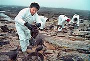 Frankrijk, Le Croisic, 10-01-2000Olievervuiling door het zinken van de olietanker Erica en de schoonmaak door vrijwilligers. De oliemaatschappij Total staat nu, vanaf 12-1-2007 terecht voor de gevolgen. Veel hulpverleners hebben een verhoogde kans op kanker, omdat destijds met beperkte bescherming werd gewerkt, en tienduizenden vogels kwamen om vanwege dit ongeluk met deze tanker voor de kust.Foto: Flip Franssen/Hollandse Hoogte