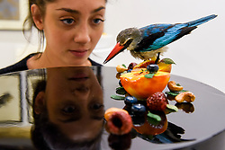 "© Licensed to London News Pictures. 31/03/2017. London, UK.  Taxidermy artist Elle Kaye views her work called ""Nectar"", 2017, a taxidermy blue breasted kingfisher.   Opening day of The Other Art Fair, presented by Saatchi Art, which runs until 2 April in Bloomsbury.  The fair is collection of artworks by 120 emerging artists selected by a committer of art experts including Lulu Guinness OBE, Kate Bryan, Head of Collections at Soho House Group, and Rebecca Wilson, Chief Curator of Saatchi Art. Photo credit : Stephen Chung/LNP"