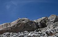 Camosci sulle montagne del passo del Forno
