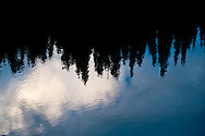 blue sky, white clouds, and conifer trees reflect on the rippled surface of a pond near Chinook Pass in Mount Rainier National Park, Washington state, USA.