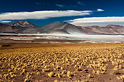 Salar de Talar, Atacama Desert, Chile.