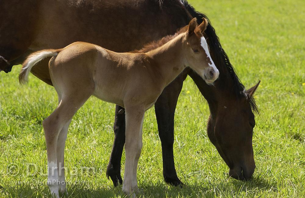 Horses enjoying the first warm day of Spring in Wallowa County, near Joseph, Oregon.