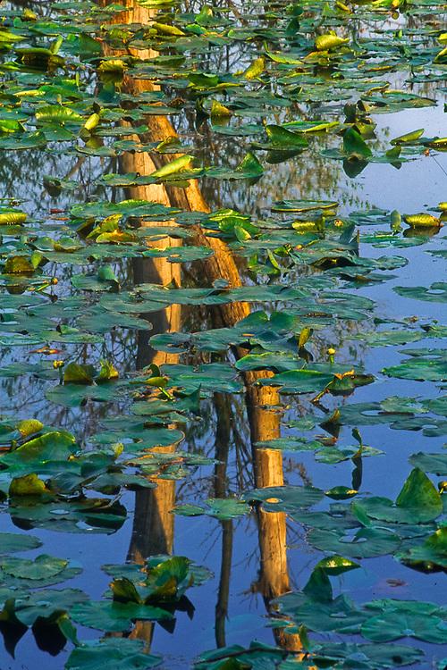 Morning reflection, Cuyahoga National Park, Ohio, USA